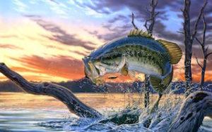 Post Spawn Bass Fishing